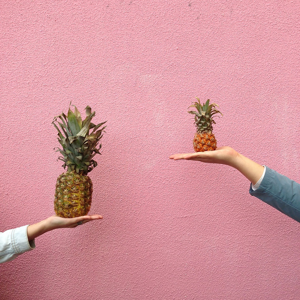 Two hands holding different sized pineapples for comparison.