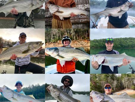 Lake Nottely & Lake Hiwassee Fishing Charters