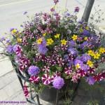 A-spring-basket-150x150.jpg