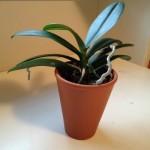 plant-150x150.jpg