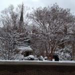 Winter-trees-150x150.jpg