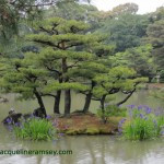 Japan-trees-with-name-150x150.jpg