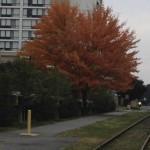 Fall-tree-150x150.jpg
