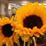 Sunflower-150x150.jpg
