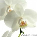 orchid-150x150.jpg