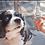 Thumbnail: LumenPro™ Pet Eye Drops