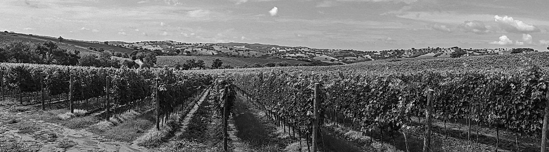 Jimex Intl Wine Export