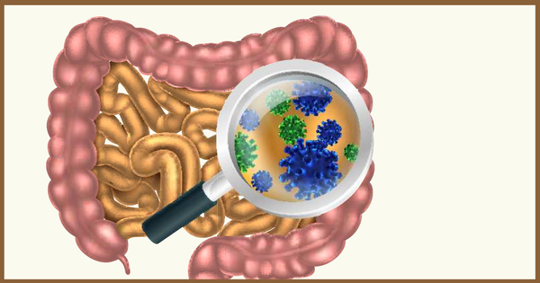 What Is a Leaky Gut and How Do I Know if I Have It?
