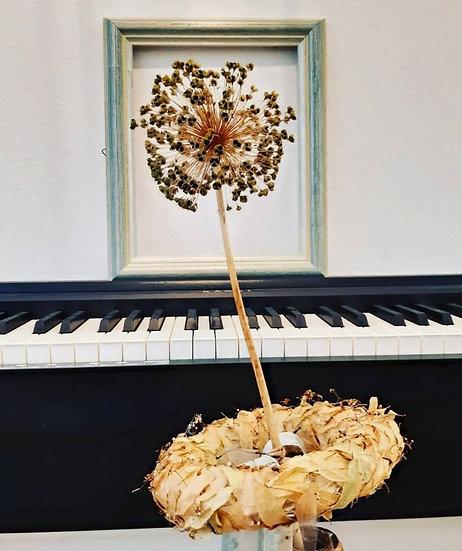 Allium décoré