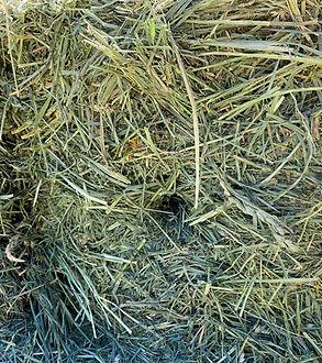 Hay Inside