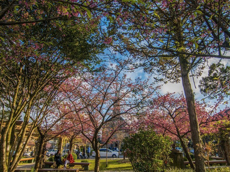 5 motivos para passar a sua lua de mel em Gramado