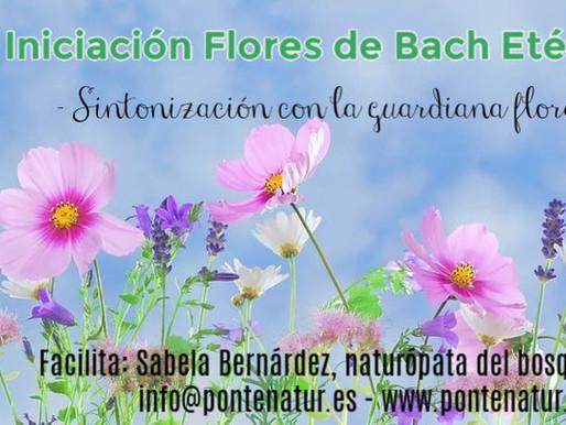 Flores Etéricas