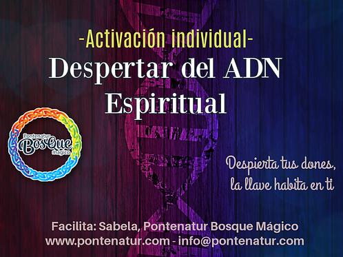 Activación  12 hebras ADN espiritual y filamento 13