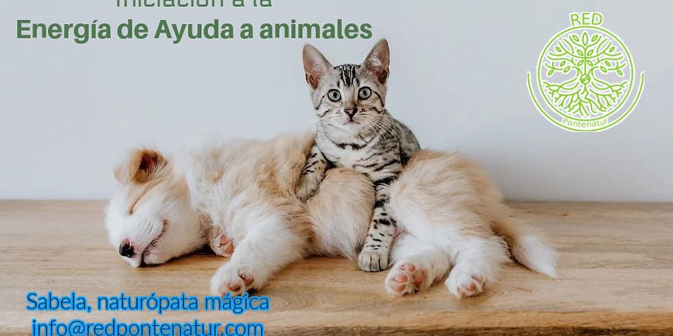 Iniciación a la Energía de Ayuda para Animales