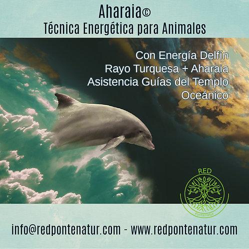 Aharaia, Técnica energética para animales