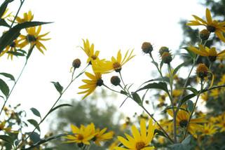 yellow mellow.jpg