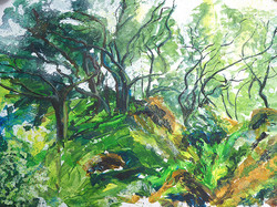 Moving Trees Ty Canol (Sold)