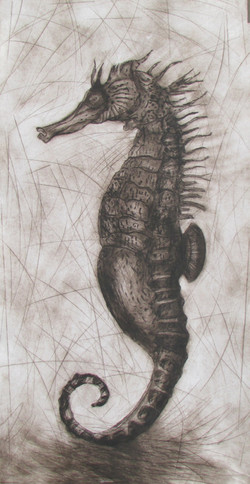 """Hippocampe"""