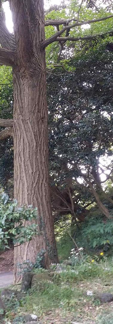 Tsukayana Park Anzinzuka
