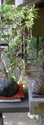 21 The Fushimi Inari-taisha Shrine
