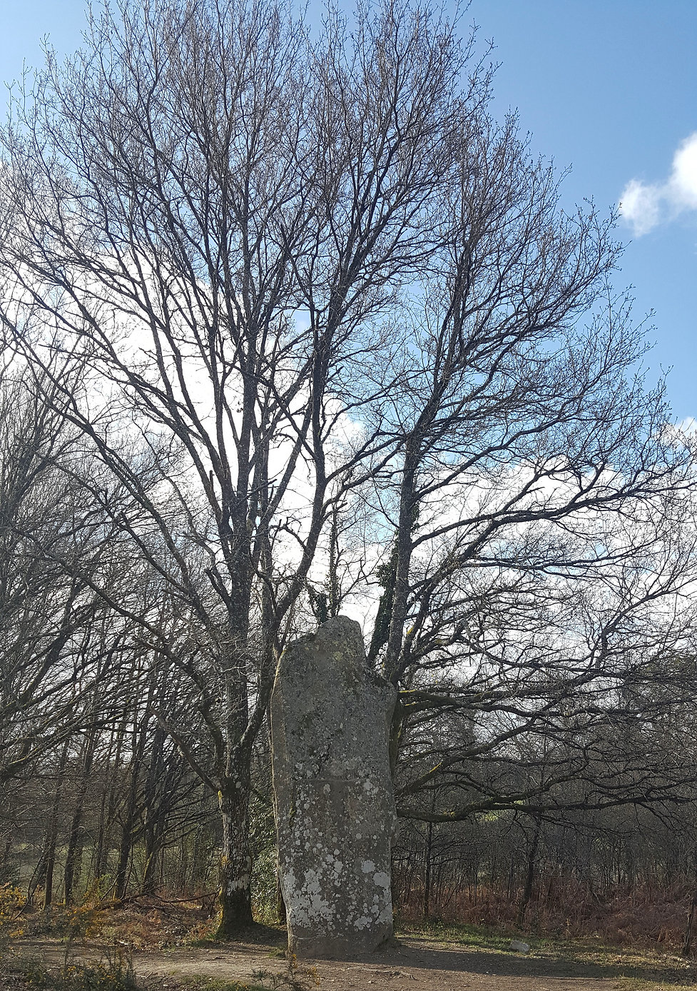 4 Menhir de Ceintura.jpg