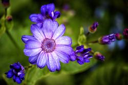 Beautiful Flower After Rain