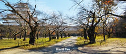 Formation of Trees Photo Gallery
