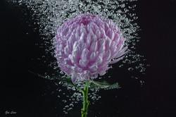 Purple Flower In The Water