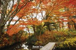 Beautiful Autumn Trees Photo Gallery