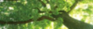 DSC02067_2_edited.jpg