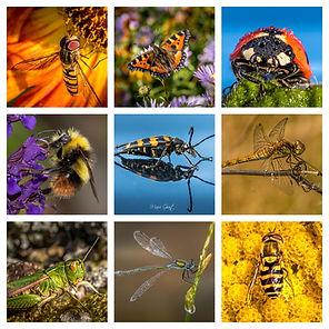 Outdoor macro collage (1).jpg