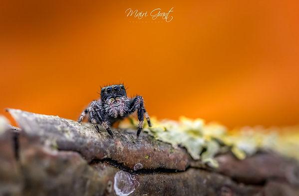 Untitled-1 spider stack 4 (2) (Copy).jpg