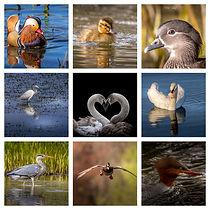 WaterBird Collage.jpg