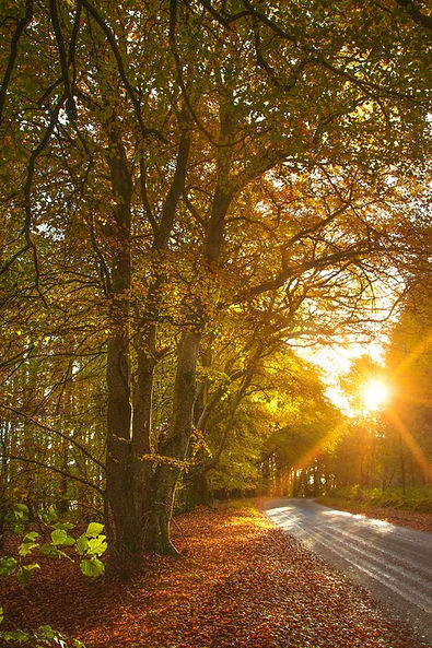 autumn sun near insch 2 (Copy).jpg