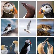 SeaBird Collage.jpg