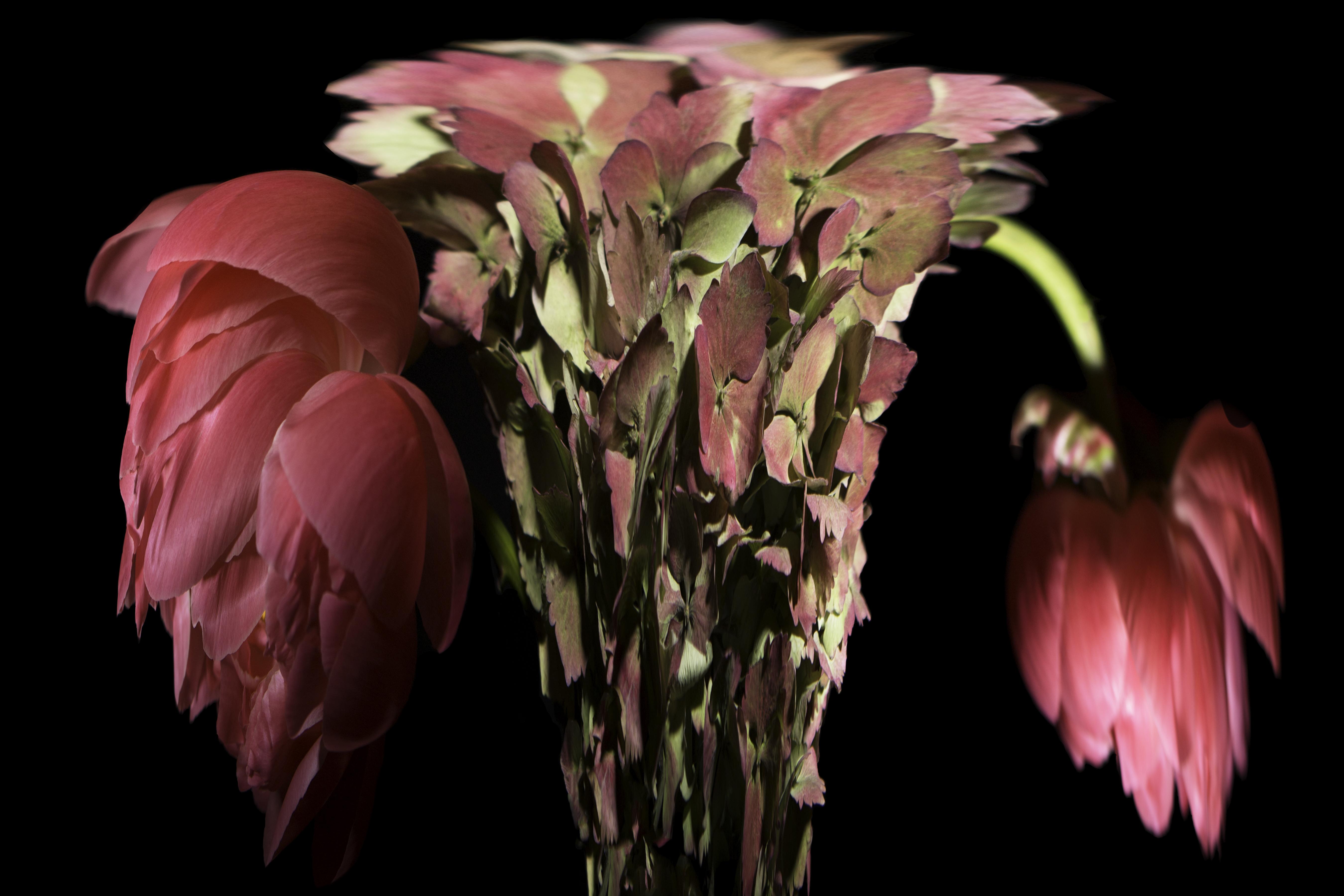 Hydrenga Vase
