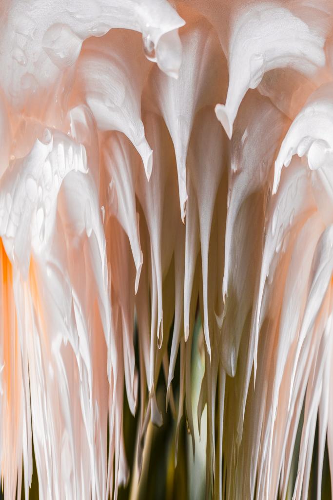 Peach Abstract #1