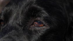 Nevica's Eye