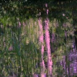 Hosmer Pond Monet