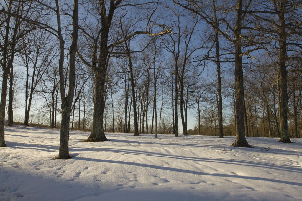 Quabbin Snow