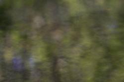 Hosmer Pond Green Blur
