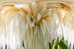 Cascading White Dahlia