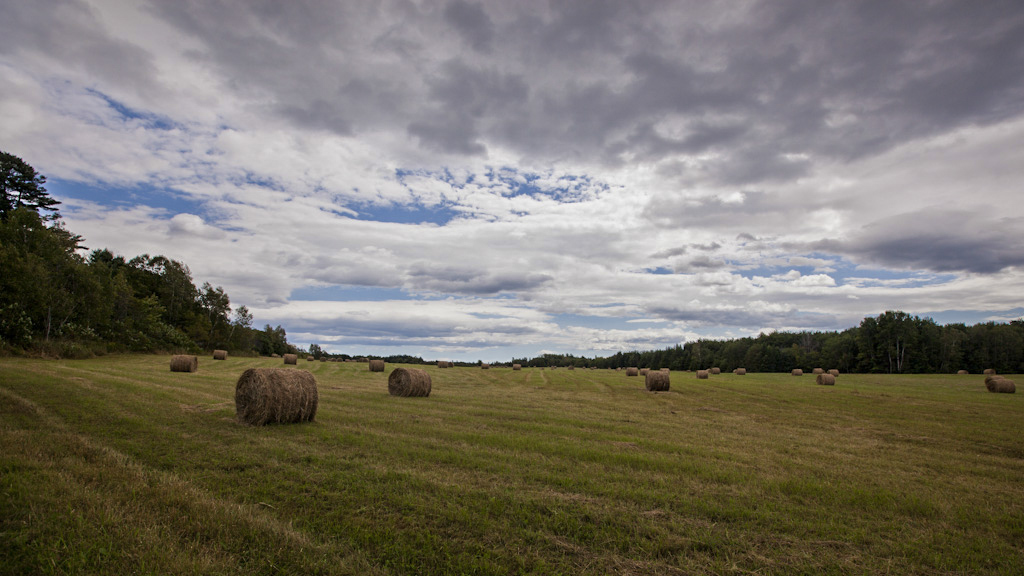 Maine Farm