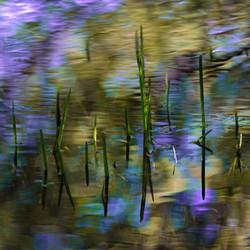 Hosmer Pond Wonderland