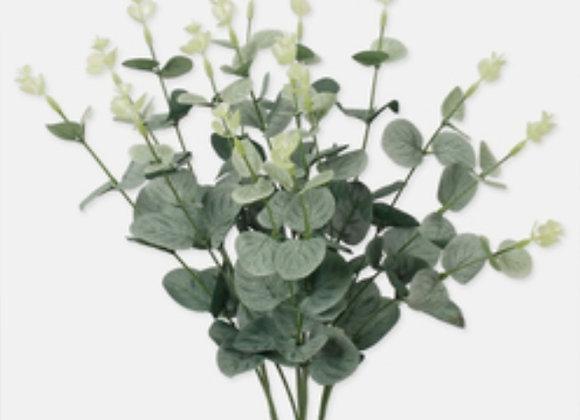 Eucalyptus bundles dark green