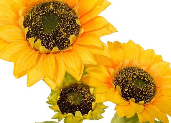 Large 3 head sunflower stem