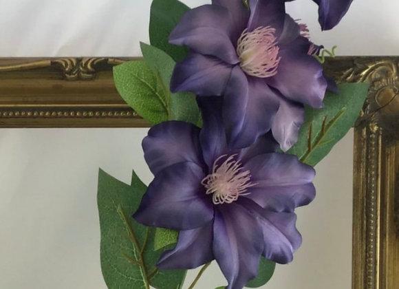 Clematis stem purple