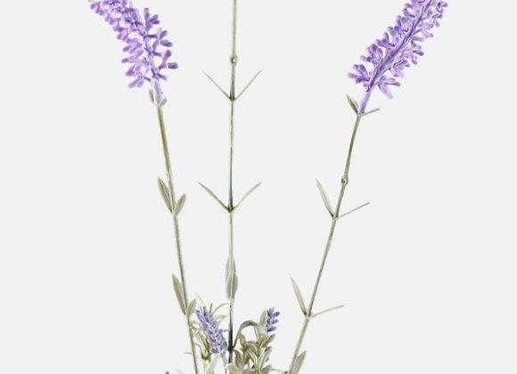 Lavender stem