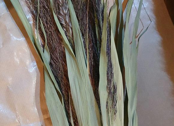 Dried reed bundle 10 stems