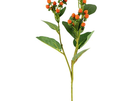 Hypericum berry orange spray